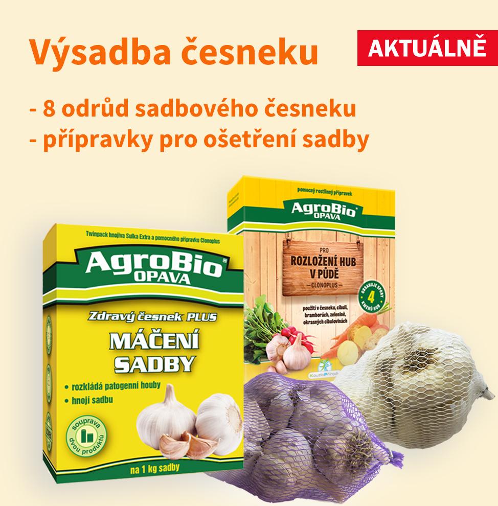 Výsadba česneku - sadba a přípravky