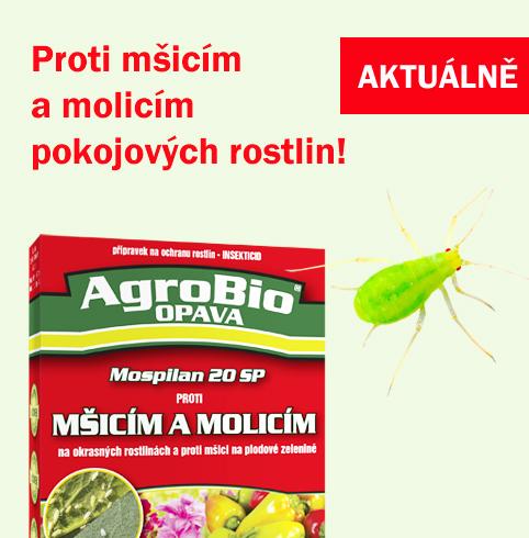 Proti mšicím a molicicím na pokojových rostlinách