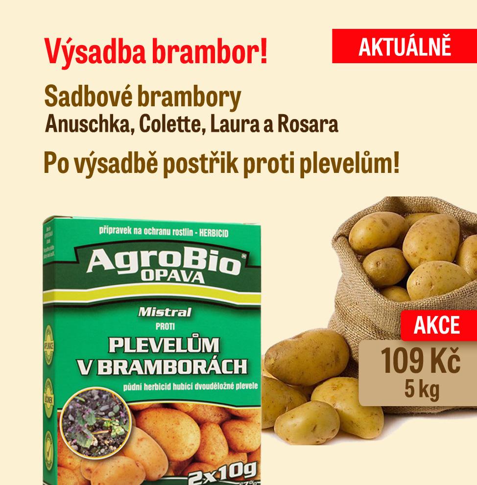 Sadbové brambory v prodeji!