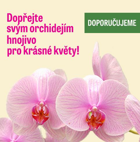 Výživa orchidejí