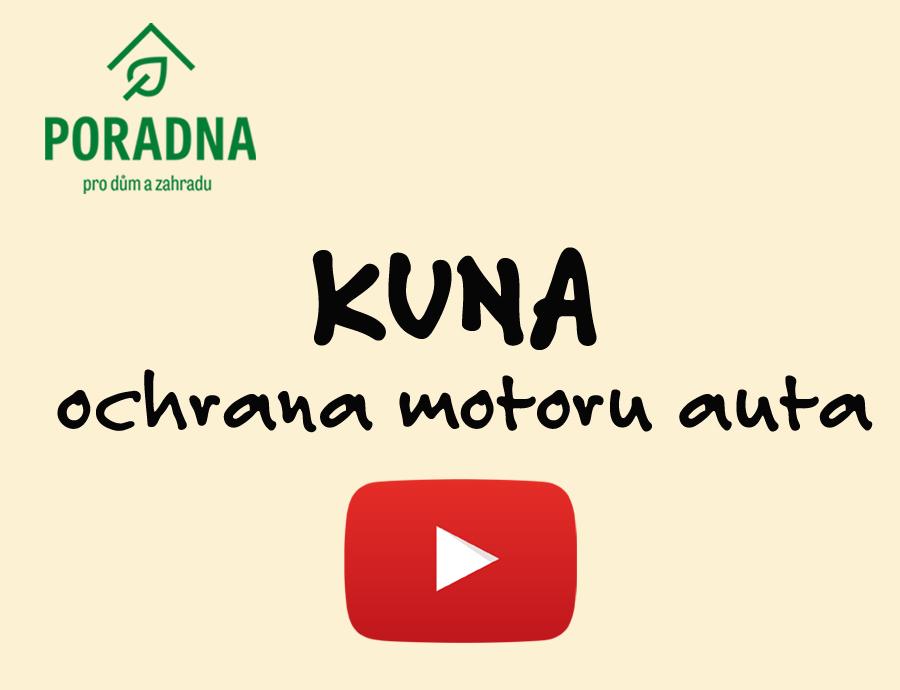 PORADNA PRO DŮM A ZAHRADU - Kuna - ochrana motoru auta