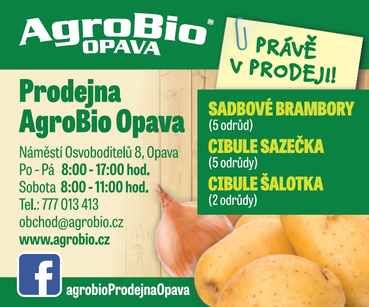 Sadbové brambory a cibule