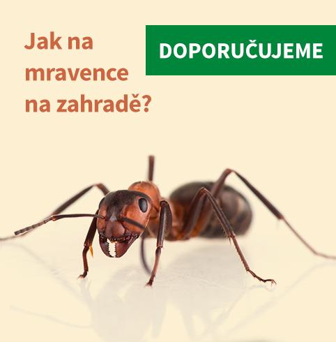 Mravenci na zahradě