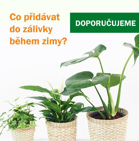 Co přidat do zálivky pokojových rostlin - Humát