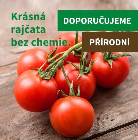 Krásná rajčata bez chemie