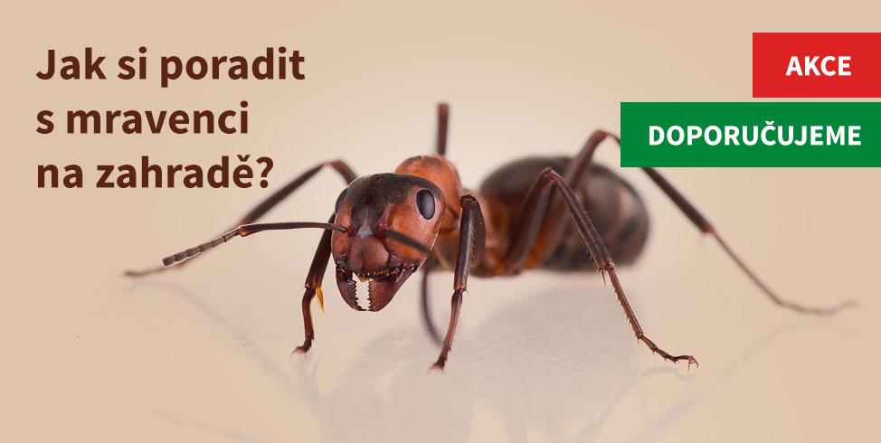 Hubení mravenců na zahradě