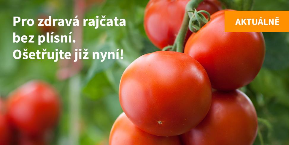 Proti plísním rajčat