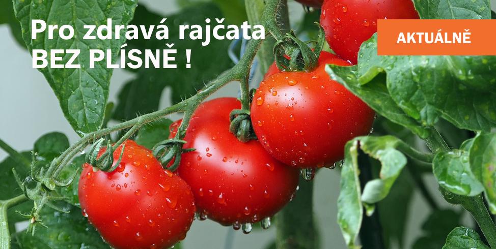 Rajčata - plíseň