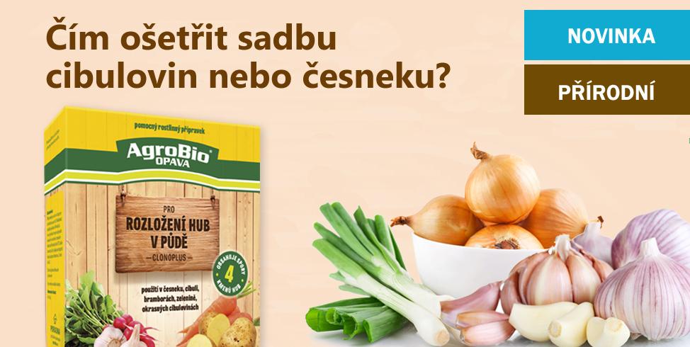 Čím ošetřit sadbu cibulovin a česneku?