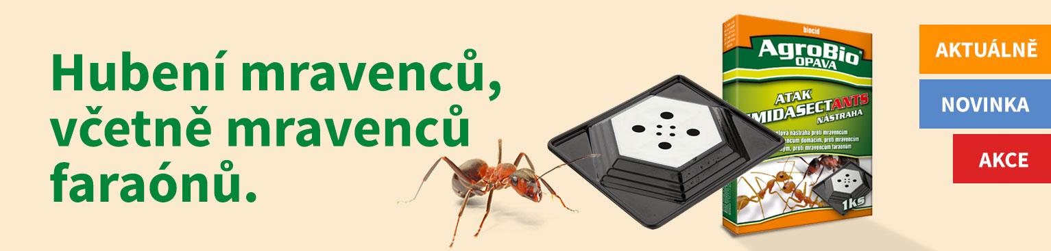 Hubení mravenců, včetně mravenců faraónů