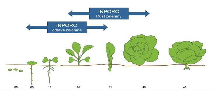 Zdravá zelenina - Odolnost zeleniny = aplikace