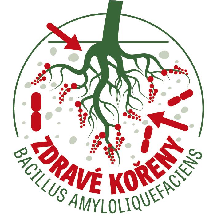 Bakterie pro zdravé kořeny