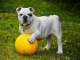 Pes -ochrana proti klíšťatům, blechám, aj.