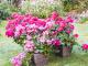 Balkónové rostliny - aplikace