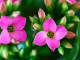 Kvetoucí pokojová rostlina - aplikace