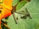 Okrasné rostliny_Housenky