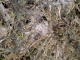 Trávník po zimě - Plíseň