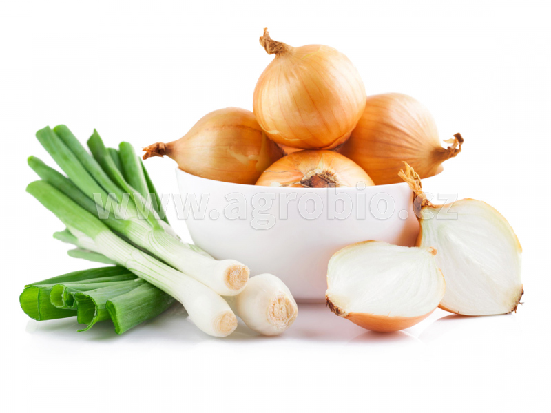 zelenina - cibuloviny
