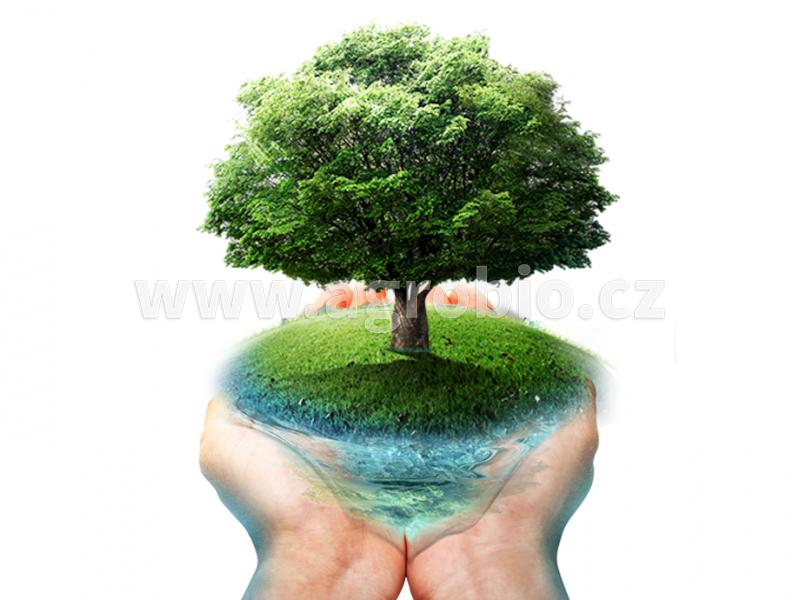 výživa stromů