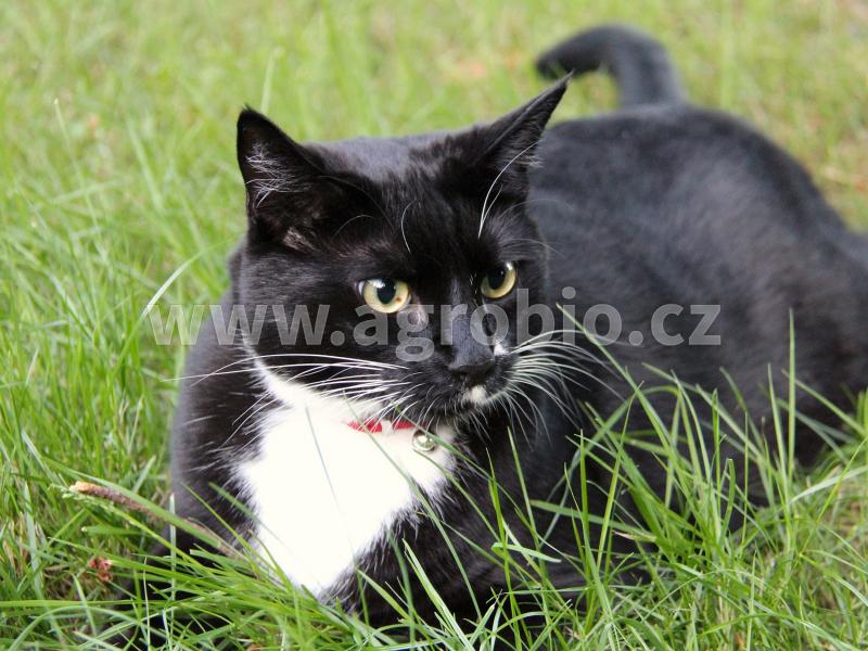 Kočka - ochrana proti klíšťatům, blechám, aj.
