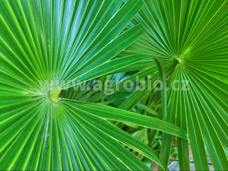 zelené rostliny