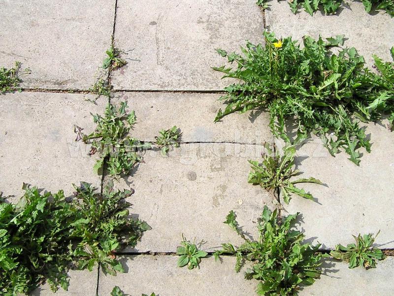 Nežádoucí vegetace_plevel mezi dlaždicemi