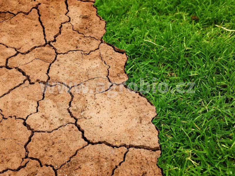 sucho_trávník_ukázka