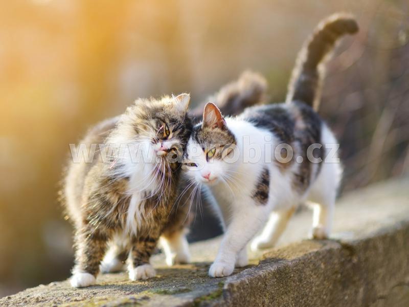 Znečišťování kočkami
