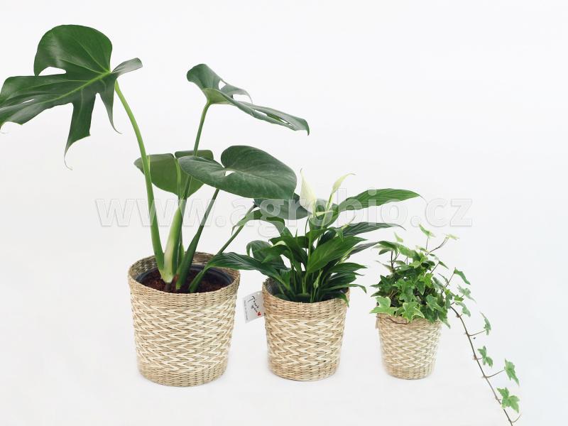 Zelené pokojové rostliny - aplikace