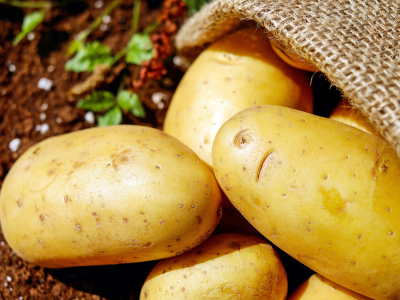 NOVINKA: Sadbové brambory