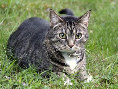 NOVINKA: Proti blechám a klíšťat u koček