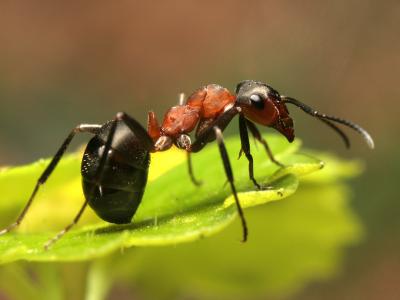 Jak na mravence?