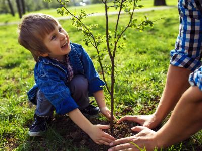 Podzimní výsadby ovocných nebo okrasných dřevin