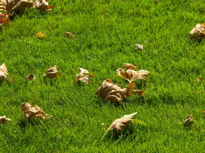 Proč a čím hnojit trávník na podzim?