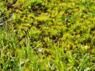 Proti mechu v trávníku