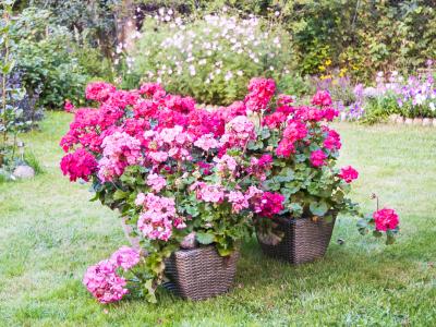 Hnojivo pro krásné balkóny, terasy a zahrady