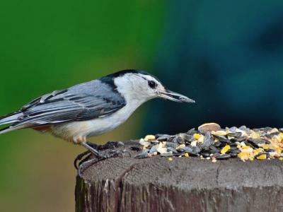 Krmení pro ptáky v průběhu zimy