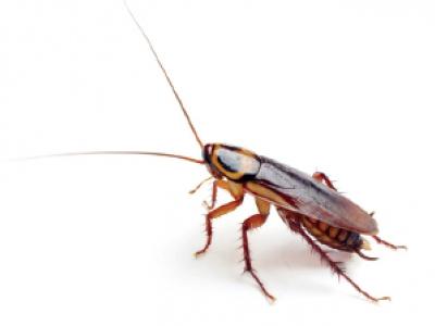 Hubení lezoucího hmyzu v bytě